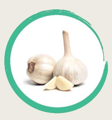garlic jpg